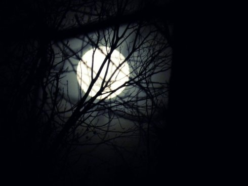 winter_moon_through_the_tree__s_by_the_true_rayneyday-d4mjmtp