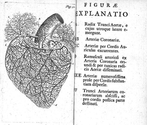 Anatomical - heart - 1700's